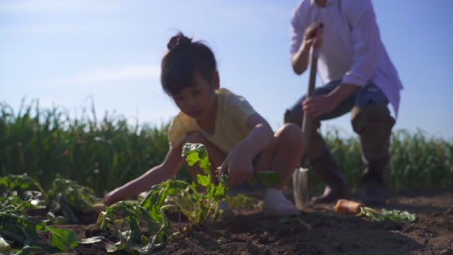 rural activity - child working at the vegetable garden - レクレーション活動点の映像素材/bロール