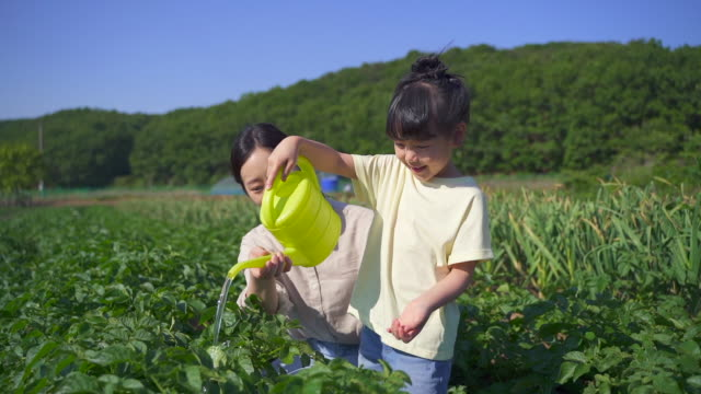 rural activity - mother and daughter giving water to plant with a watering can at the field - short sleeved stock videos & royalty-free footage