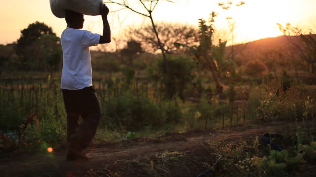 rural african farmer carries bag of food on his head - malawi stock videos & royalty-free footage