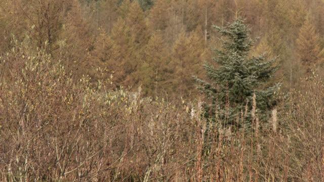 Rural autumn scene in Scotland