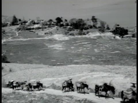 rural china w/ team of donkeys loaded w/ supplies walking single file on narrow road below ms donkeys walking w/ packs packed full beast if burden... - narrow stock videos & royalty-free footage