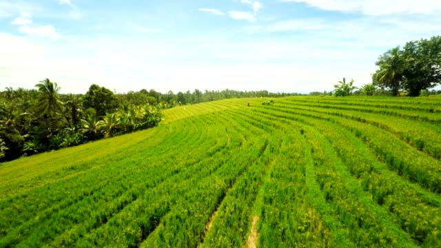 AERIAL Rural Countryside In Bali