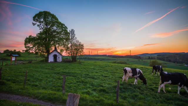 crane: rural countryside with grazing cattle in germany - 4k nature/wildlife/weather - meadow stock videos & royalty-free footage