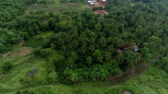 rural farmlands of sri lanka: 4k - sri lankan culture stock videos & royalty-free footage
