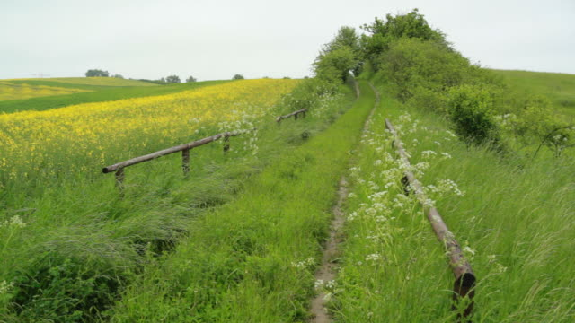 Rural German Landcape in early Summer