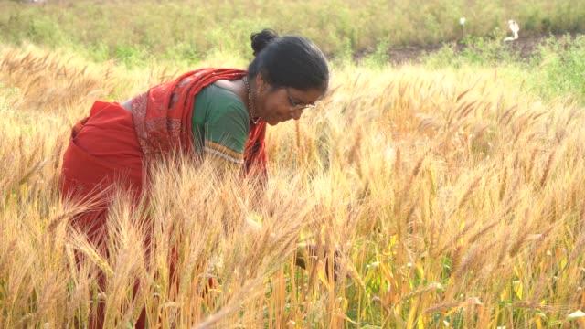 rural indian women in the field, maharashtra, india. - indian ethnicity点の映像素材/bロール