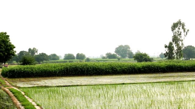 landsbygdens landskap panorering - durra bildbanksvideor och videomaterial från bakom kulisserna