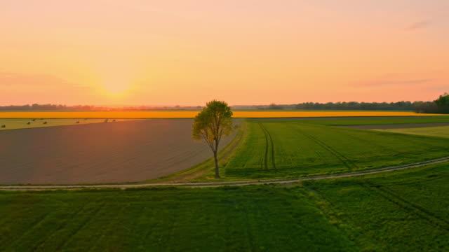 ws aerial pov rural landscape - single tree stock videos & royalty-free footage