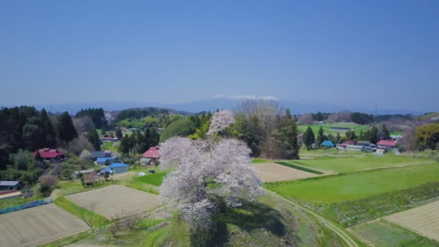 aerial ws rural landscape with cherry blossom - 郊外の風景点の映像素材/bロール
