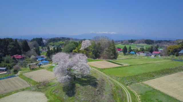 aerial ws rural landscape with cherry blossom - 農村の風景点の映像素材/bロール