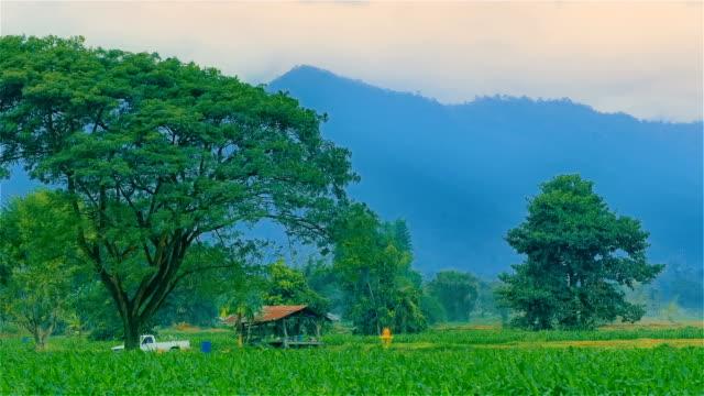 Ländlichen Landschaft mit grünen Mais-Feld