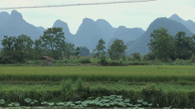 ws rural landscape with rice paddy and karst hills in distance / yangshuo, guangxi, china - yangshuo stock videos & royalty-free footage