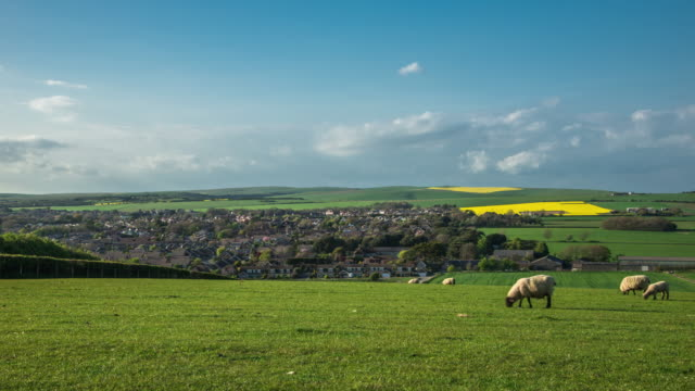 A rural landscape with sheep grazing in the farmers field on a sunny spring day with the small seaside town of Seaford in the background