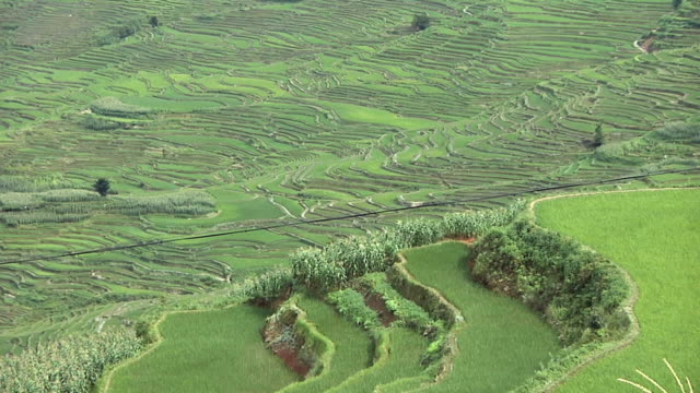 WS HA Rural landscape with terraced rice fields / Yuanyang Rice Terraces, Yunnan, China
