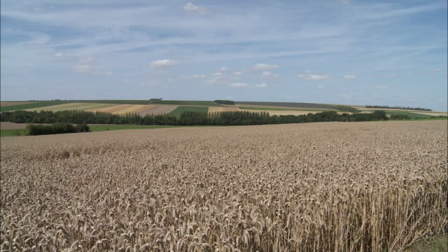 vidéos et rushes de ws pan rural landscape with wheat field in foreground, voves, beauce, france - patchwork landscape