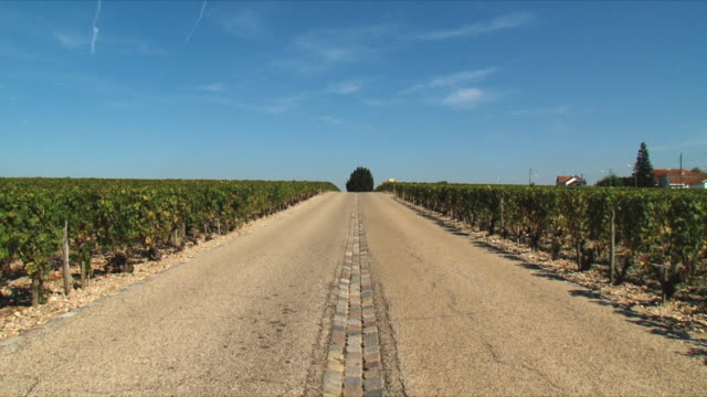 ws rural road between vineyards / bordeaux, gironde, france - gironde stock videos and b-roll footage