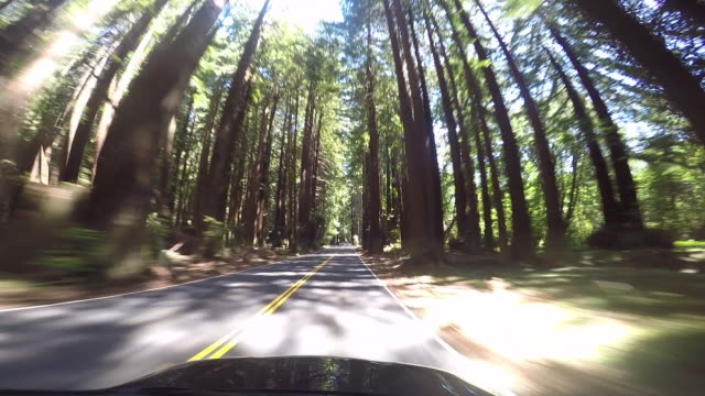 vídeos de stock, filmes e b-roll de a rural road in the northern california coastal area with the pacific ocean and redwood trees. - sequoia sempervirens