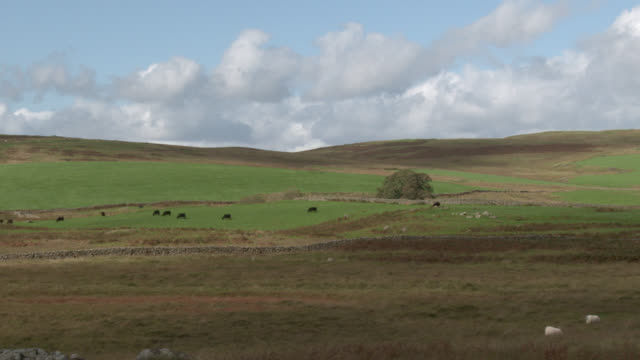 rural scene of remote scottish countryside - livestock stock videos and b-roll footage