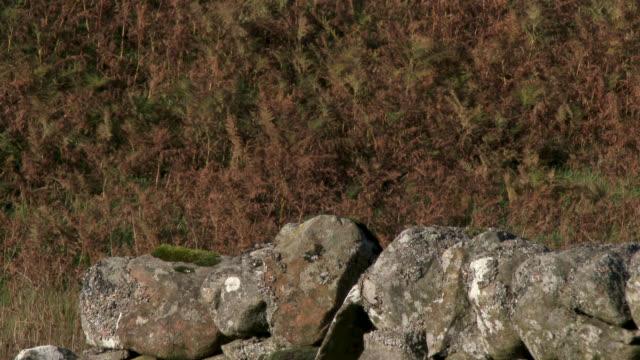 stockvideo's en b-roll-footage met landelijke scène van afgelegen schotse platteland - dumfries en galloway