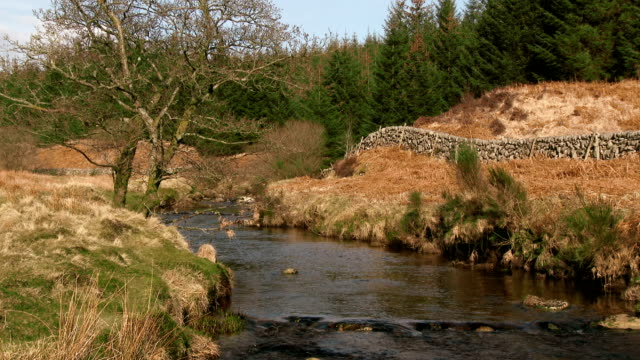 Rural Scottish scene with a flowing stream and woodland