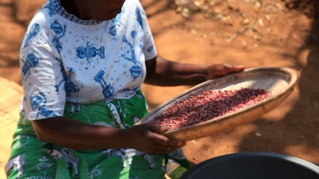 Ländliche Frau in Malawi Sichtung Bohnen