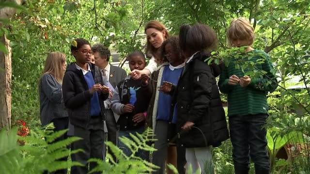 rushes of catherine duchess of cambridge chatting to children at her 'back to nature' woodland garden design which she unveiled as part of the... - chelsea flower show stock videos & royalty-free footage