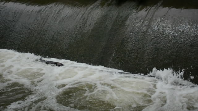 Rushing water spillway at a low head dam after heavy rain
