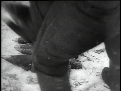 russian artillery firing / cannons firing / soldier saluting - 1941 stock-videos und b-roll-filmmaterial