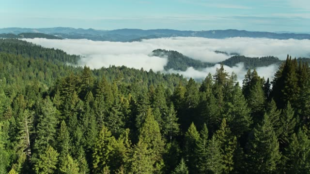 Russian River Valley Covered by Morning Fog - Aerial