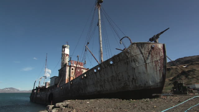 ms, rusted whaling ship at abandoned whaling station grytviken, south georgia island, falkland islands, british overseas territory - südlicher seeelefant stock-videos und b-roll-filmmaterial