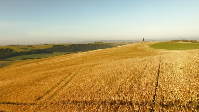 aerial ruts in a field of wheat - wheat stock videos & royalty-free footage