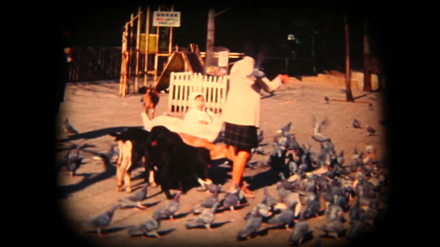 60's 8mm footage - feeding animals in a park - animal wing stock videos & royalty-free footage