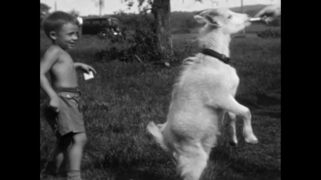1930's Boy and Grandmother play with goat in the countryside