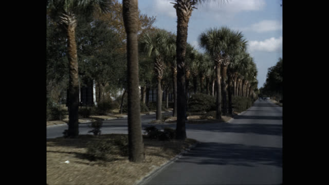 1950's - car pov driving road lined with palm trees, usa - palm tree stock videos & royalty-free footage