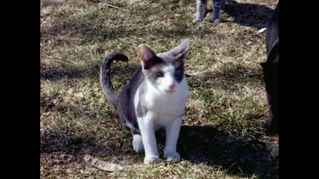1970's cats looking into camera - pennsylvania stock videos & royalty-free footage
