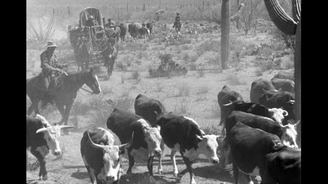 1930's - cattle drive in desert, herd of cattle followed by wagon drawn by mules - cattle drive stock videos & royalty-free footage