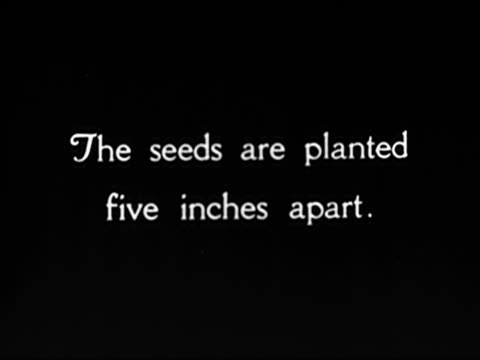 1920's - coffee plants cultivated from seedlings. - monoculture stock videos & royalty-free footage