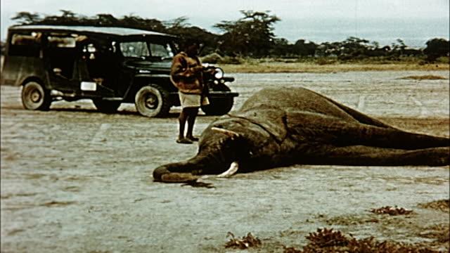 1960's elephant inquest, tanzania - 公園保安官点の映像素材/bロール