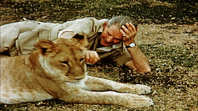 1960's  game warden playing with lioness - pets stock videos and b-roll footage