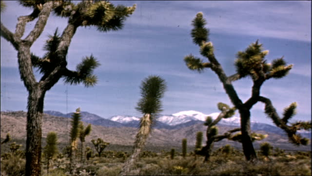 1950's joshua tree national park - environment stock videos & royalty-free footage