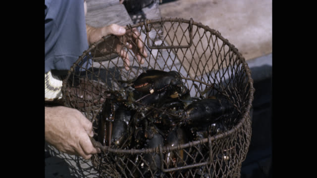 1950's - man putting lobsters in basket, usa - lobster stock videos & royalty-free footage