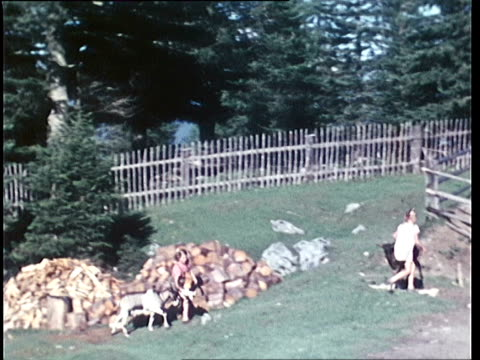 1940's montage kids playing with black goats on alpine pasture / tyrol, austria - austria stock videos & royalty-free footage