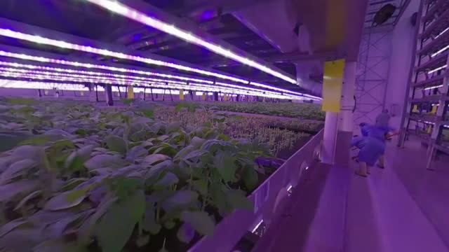 s of vertical farming at jones food company, scunthorpe, using sustainable agriculture to grow fresh food indoors - freshness stock videos & royalty-free footage