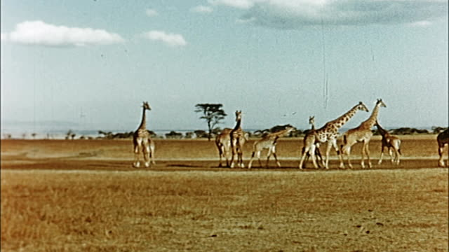 1960's tanzania wildlife - tanzania stock videos & royalty-free footage