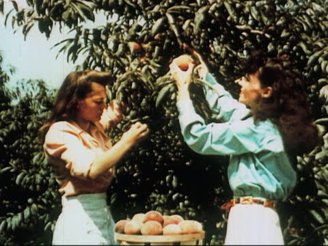 """1960's - women picking grapes, apples, peaches - """"archive farms"""" stock videos & royalty-free footage"""