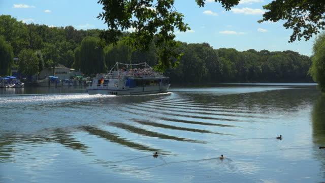 saale river near bernburg, saxony-anhalt, germany - kleine gruppe von tieren stock-videos und b-roll-filmmaterial