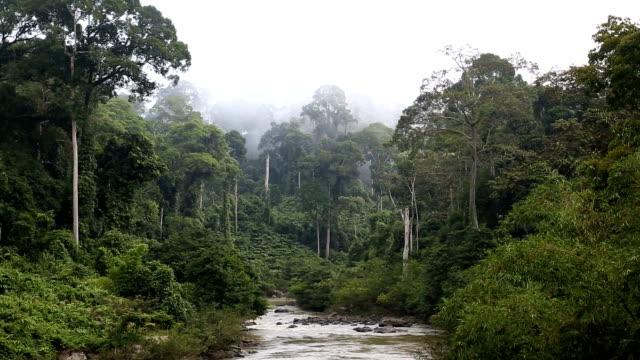 sabah borneo malaysia asia rainforest tree river - malaysia stock videos & royalty-free footage
