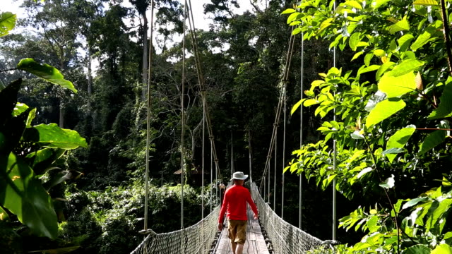 vídeos de stock e filmes b-roll de sabah borneo malaysia asia rope bridge rainforest tree male  - ponte suspensa