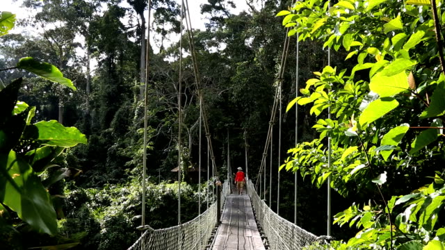 sabah borneo malaysia asia rope bridge rainforest tree male  - sabah state stock videos and b-roll footage