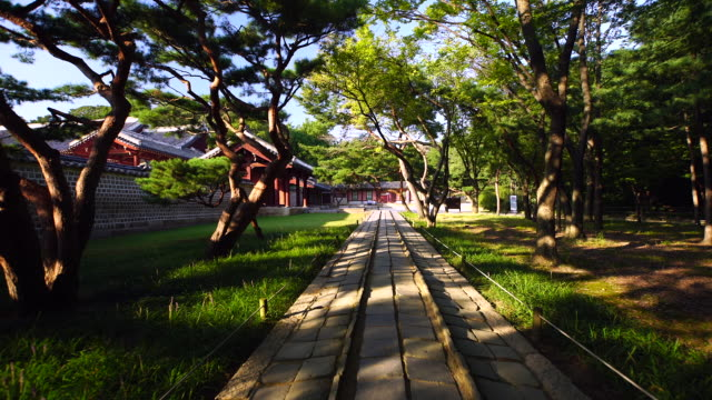 a sacred road in jongmyo shirne (unesco world heritage site in seoul) at day - dolly shot stock videos & royalty-free footage